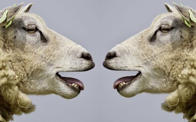 Estilos comunicativos básicos: agresivo, pasivo y asertivo